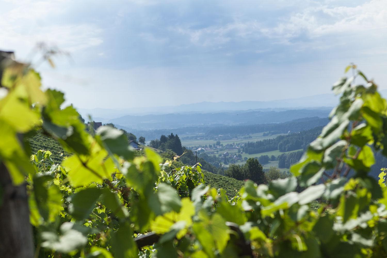 Weingarten,-blick-aufs-wildbachtal